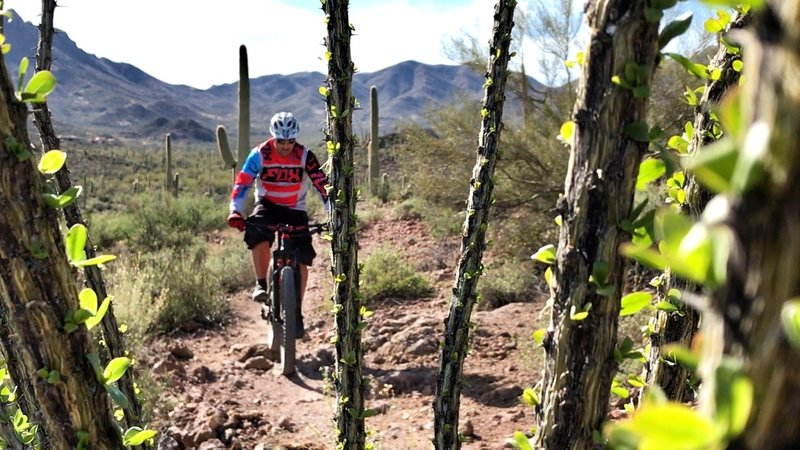 Have fun rolling through the flowy singletrack at Sweetwater Preserve.