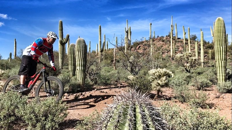 Some awesome saguaros really make your ride on The Spine.