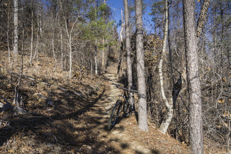 Leatherwood Creek Trail features a flowing descent with a few switchbacks, or a fun climb if ridden clockwise.