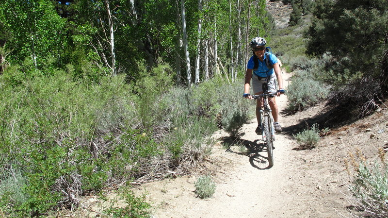 The first section of Lower Rock Creek Trail is buff with some fast, fun sections through the trees.