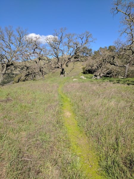 Middle Steer Ridge Trail confronts steep gradients that will either test your lungs or your brakes.