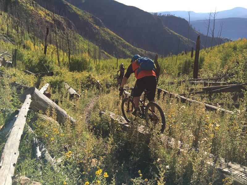Enjoy a few well-placed log rides along the Haflin Creek Trail.