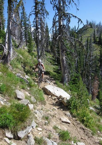 This is typical techy Bear Pete Ridge Trail singletrack.