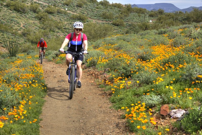 Poppies bloom all around you on a ride along the Sidewinder Trail.