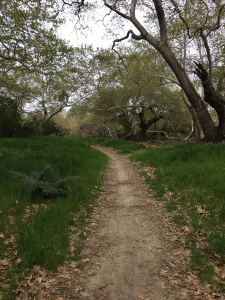 Pleasant singletrack and leafy trees make up much of the Arroyo Trabuco Trail.