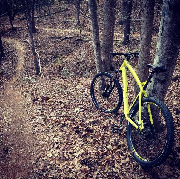 Hickory City Park's numerous unblazed splits can make it hard to stay on trail.