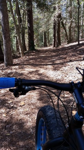 This smoother area of the trail offers less roots and a slight downhill.