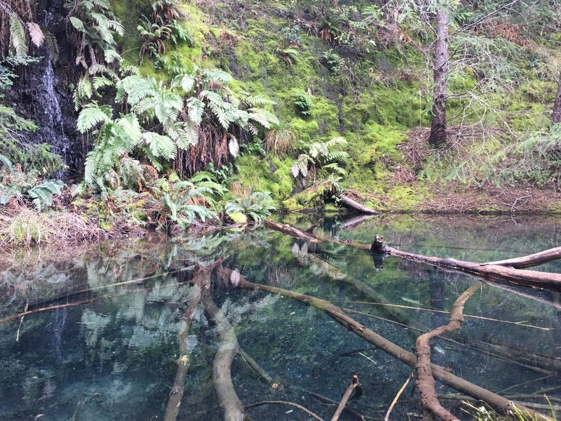 Check out this pool of freshwater hosting numerous California Newts near the 3/4 mark of the Paradise Royale Loop.