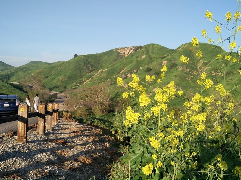 Chino Hills State Park is rife with wildflowers after a wet spring.