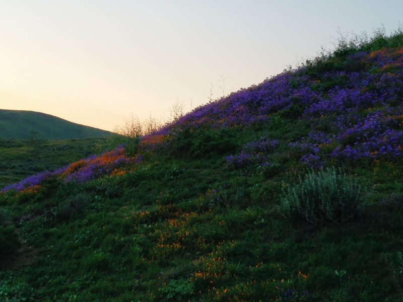 The sun sets over the day's final scene in Chino Hills State Park.