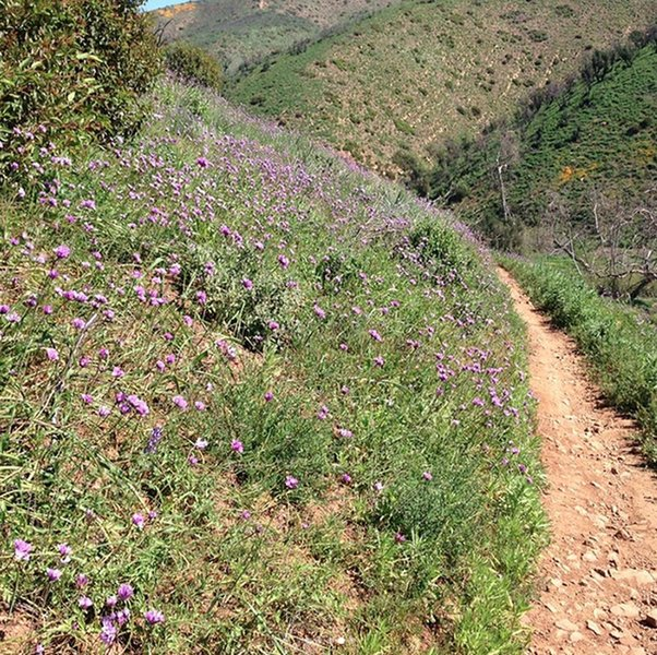 Backbone DH Overlook offers gorgeous wildflowers and greenery.
