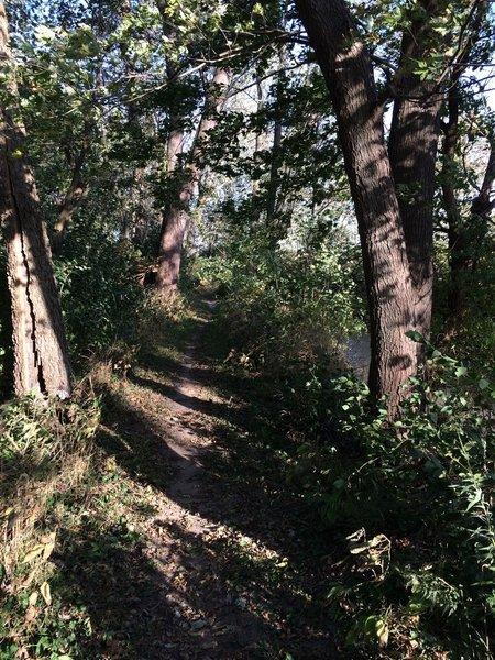Trail 4 heads through dense woodlands along Mauvaise Terre Creek.