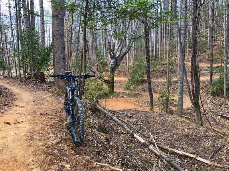 The Intermediate Loop at Cub's Creek offers winding singletrack through dense hardwoods.