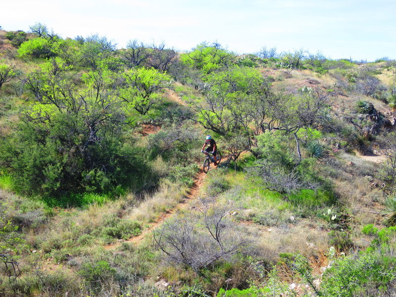 A rider cruises one of the descents along the trail.