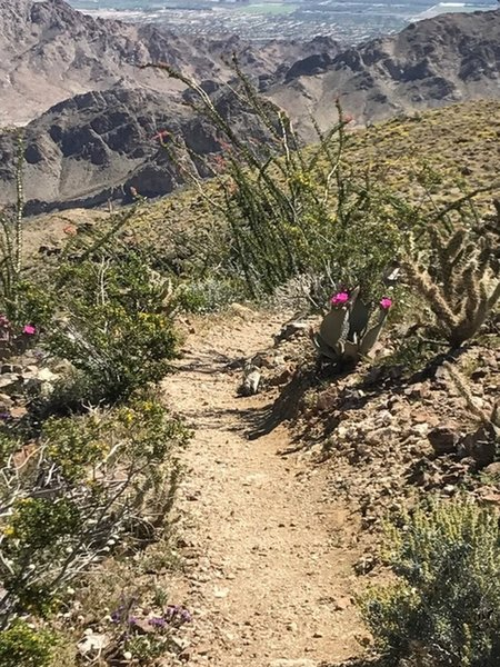 Desert blooms make for beautiful trailside companions riding along the Bear Creek Oasis Trail in early spring.
