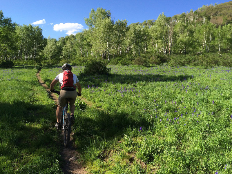 A rider ascends the south side of Braderich Creek Trail (Tall Pines).