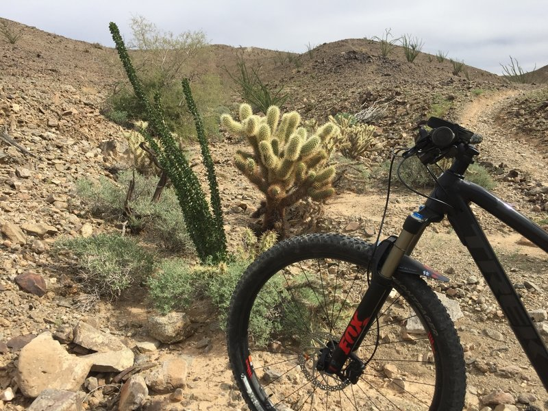 There's a nice vegetated area on 10-Mile Romp. Beware of leaning your bike near a cactus. When it falls, you'll be plucking spikes from your grip!