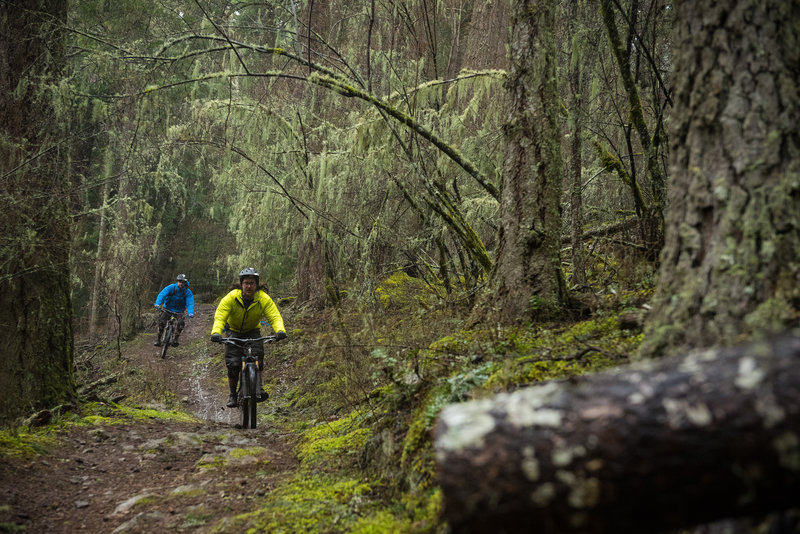 Cold Springs Trail consists of fast straightaways that speed into abruptly sharp corners.