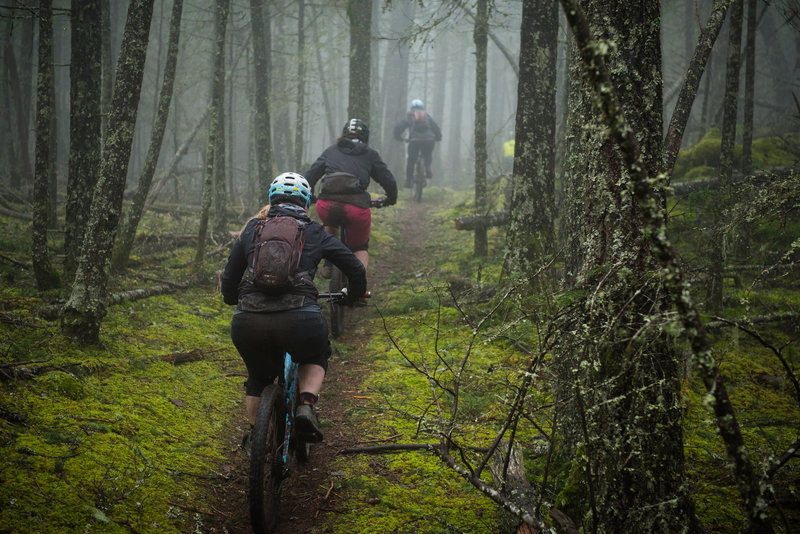 Moran State Park is nothing but miles of classic singletrack through a moss-covered forest.
