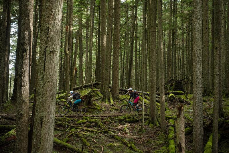 A pair rides through an old-growth wonderland.