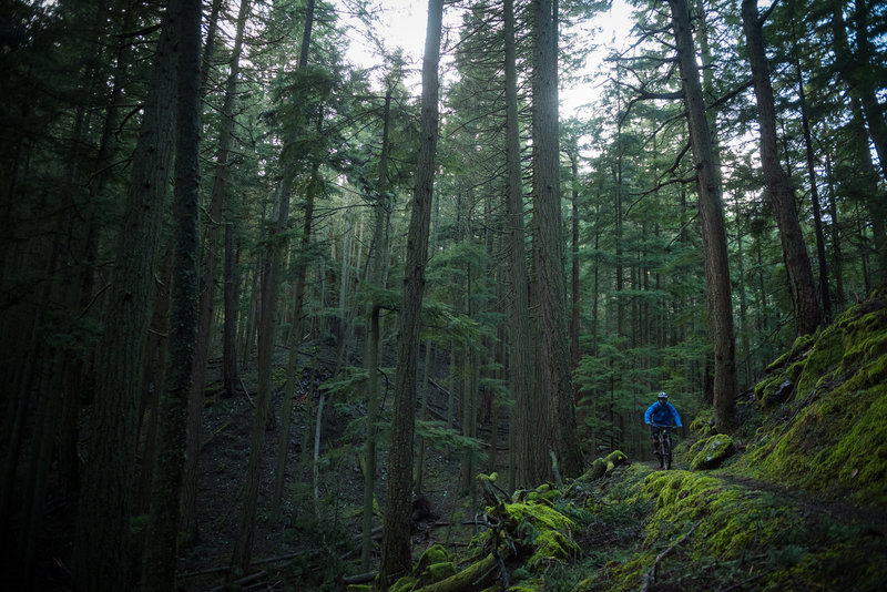 More singletrack goodness awaits on the North Trail.