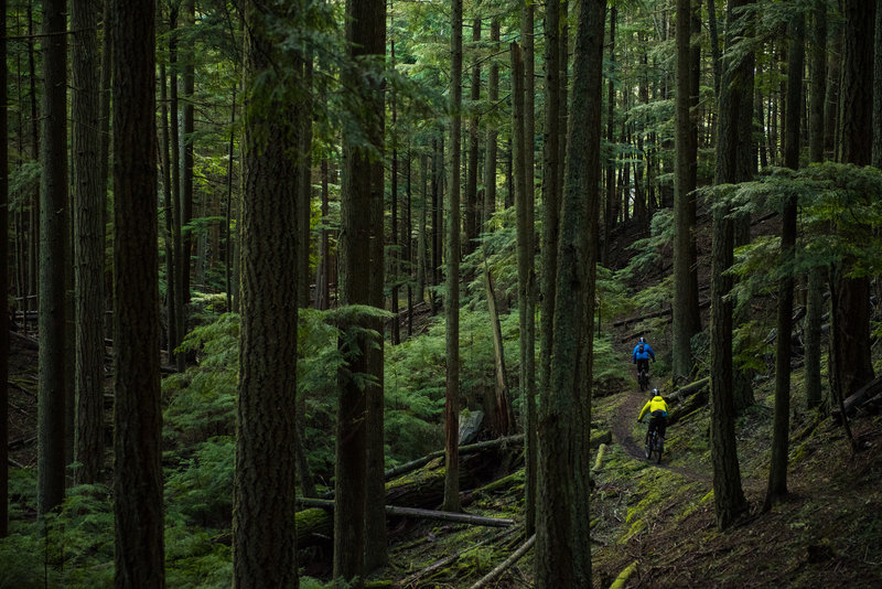Justin and Ryan bike through a peaceful forest in Moran State Park.
