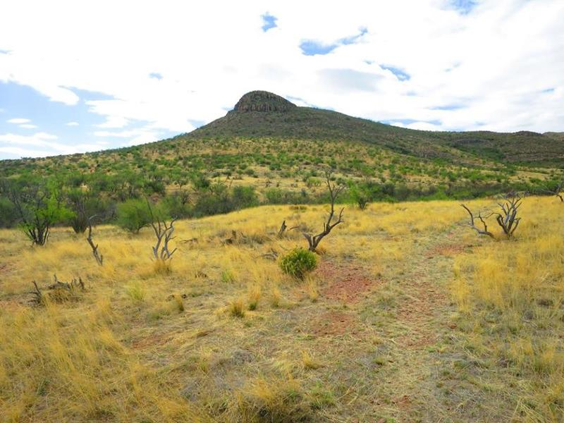 The singletrack meanders through Sonoran grasslands.