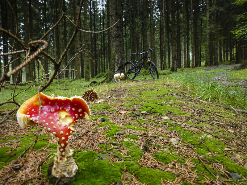 The trail weaves through a dank forest with lots of wild mushrooms.
