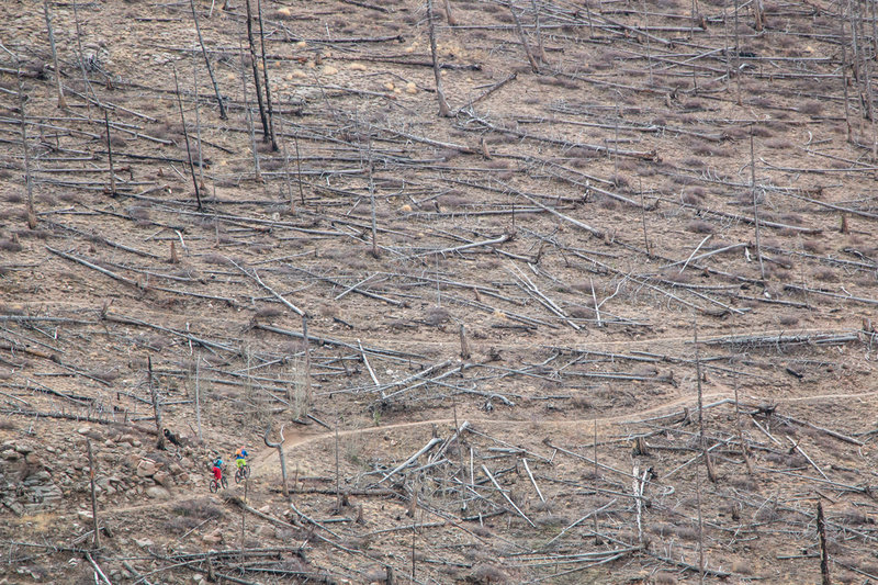 A pair rides through an old wildfire burn area on the Walker Ranch Link Trail.