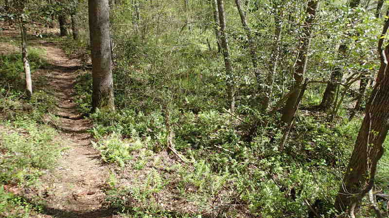 You'll find some classic ribbons of singletrack on the Swamp trail.