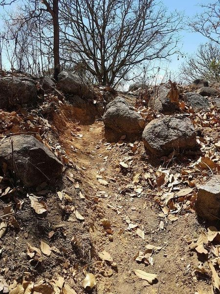 Mind the rocks that give the trail a rowdy flavor.