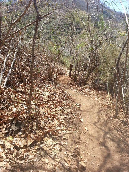 There's lots of fast singletrack and more up ahead.