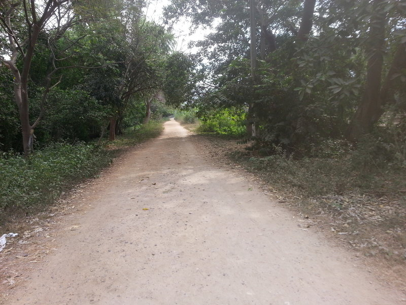 The dirt road along the Pitial River.