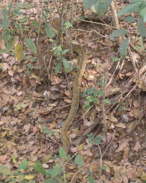 Watch out for snakes, they can be pretty big and blend in well!