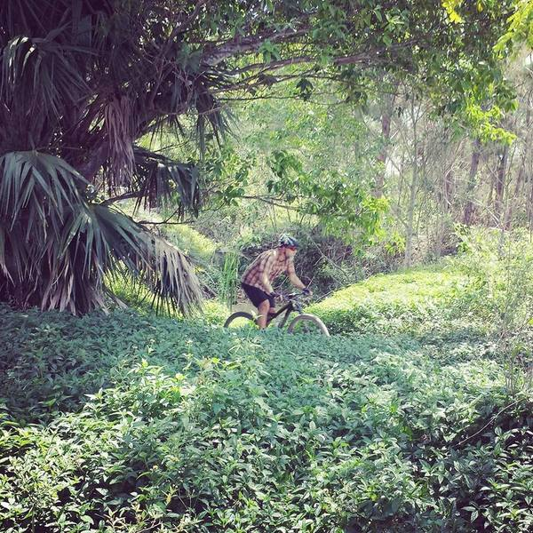 The Spider Bite Trail has a very Amazon feel as you pedal through the lush vegetation.