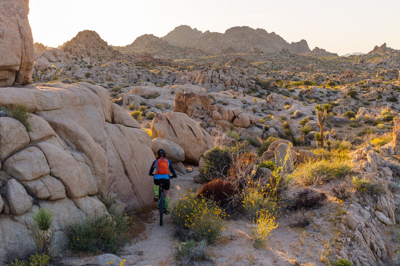If Dr. Seuss had a mountain bike, this is where he'd ride.
