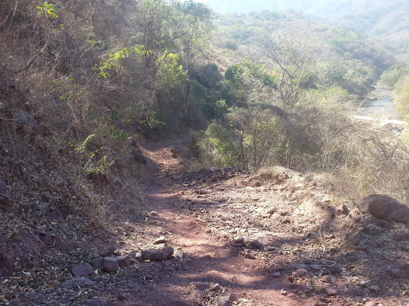 The start of the trail is slightly rougher with sections of scattered rocks.
