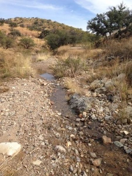 One of the few flowing streams along the Cobre Ridge Loop.