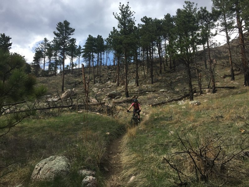 The singletrack here is narrow and deep; don't ride out of the rut!