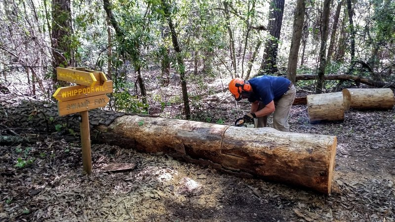 Steve cutting the big pinetree blocking entrance/exit to Swamp Fox signifying the trail is open!