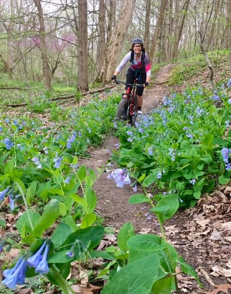 Julia riding past spring wildflowers on Trail B.