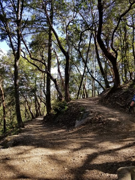 A wonderfully built switchback leading downhill on John Nicholas trail