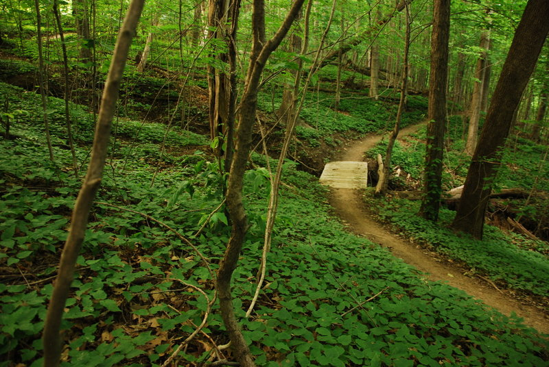 A great little bridge transition through a lush forest.