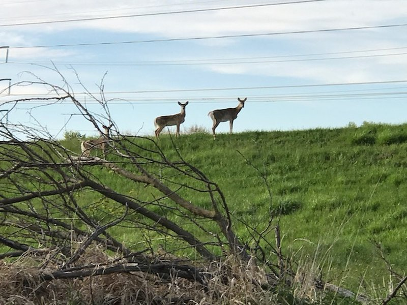 You'll likely see deer during your ride, no matter what time of day.