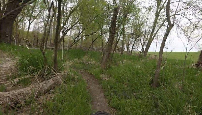 A narrow ribbon of singletrack along the edge of the tree line.
