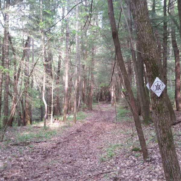 A section of really nice doubletrack along Section 30 of the Sheltowee Trace NRT.