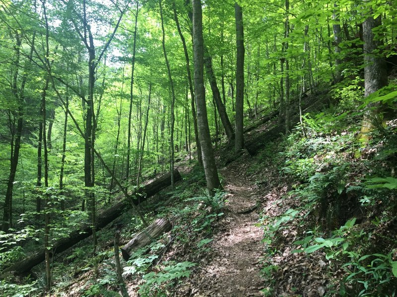 Just past the mid-way point on the Hemlock Hollow Trail.