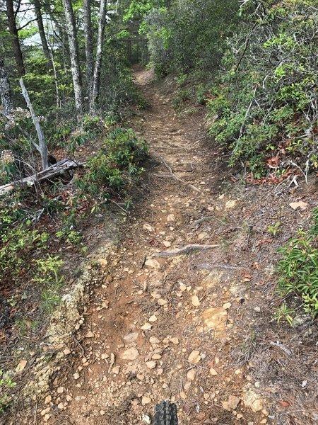 Looking up trail on Star Gap, headed towards the bottom of Heartbreak Ridge