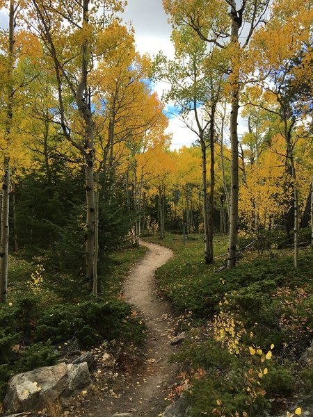 A golden canopy floats above the Mule Deer Trail in the fall.