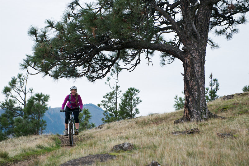 Ashley rides beneath a lone tree on the Little Moab Trail.